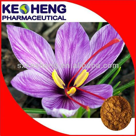 Eye Care Herbal Tech 1 saffron extract powder from gmp manufacturer