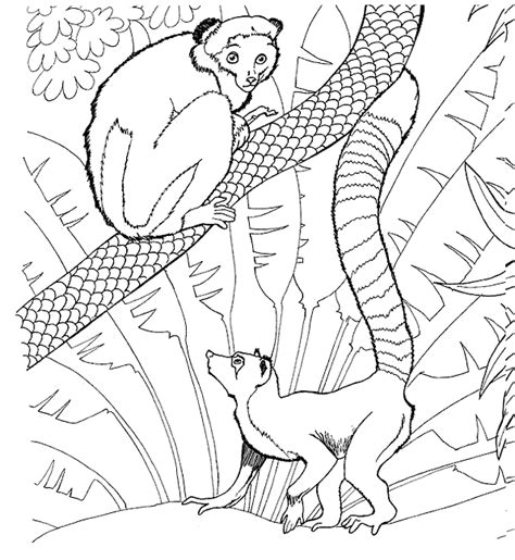 amazing coloring pages zoo printable coloring pages