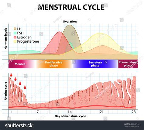 Has Trouble Detoxing Estrogen Endometriosis by Menstrual Cycle Menstruation Follicle Phase Ovulation