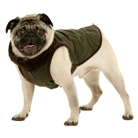 pug leather jacket jacket for pug mops dogissimo