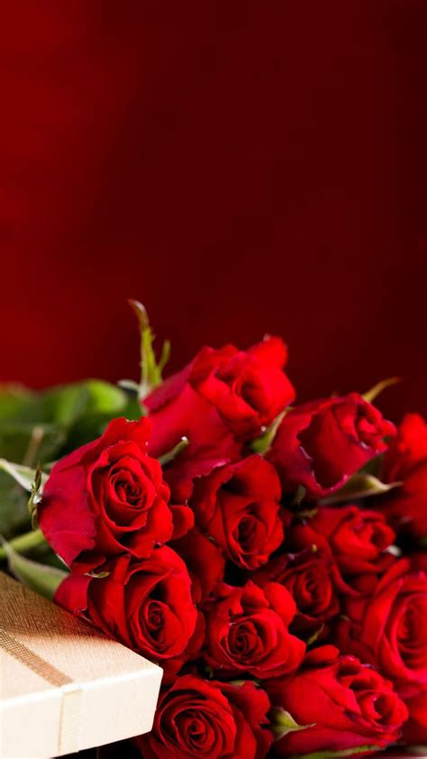 hd wallpaper android rose red rose hd wallpapers for android wallpaper images