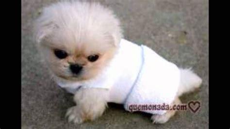 fotos animales bebes tiernos perros tiernos youtube