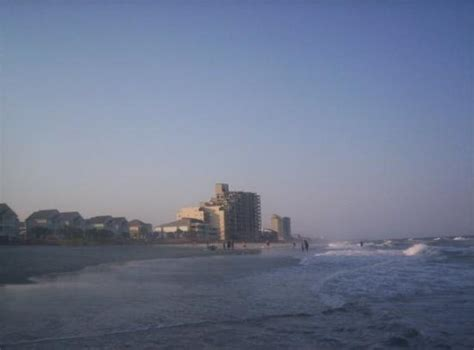 Garden City Myrtle by Garden City Picture Of Myrtle Coastal South