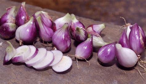bawang merah ciri tanaman  khasiat  manfaatnya