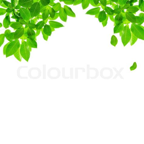 Green leaf border design on white background   Stock Photo