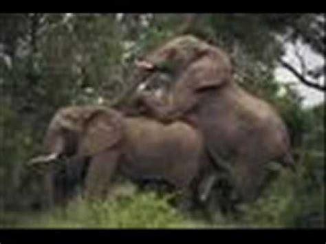 imagenes de mamonas assassinas mamonas mundo animal youtube