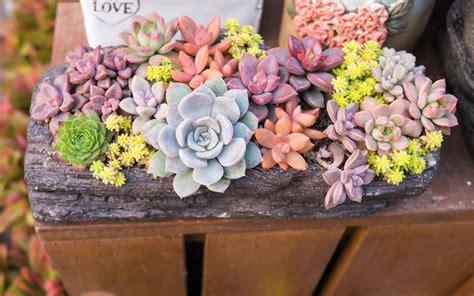 unique planters for succulents 47 best succulents images on pinterest succulent