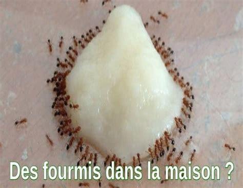 comment se d饕arrasser des fourmis dans une cuisine fourmi dans la maison 28 images comment pr 233 venir l