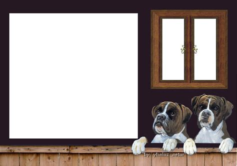 marcos para fotos png animales png el rincon de imagenes marcos para fotos