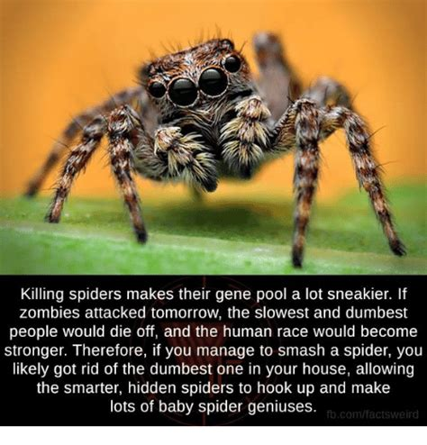 Killing Spiders Meme - kill spider meme www pixshark com images galleries
