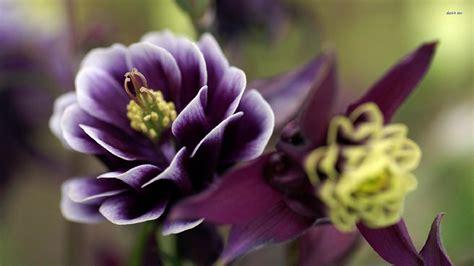 Garten Pflanzen Blaue Blüten by Die 65 Besten Lila Blumen Sch 246 Ne Hintergrundbilder