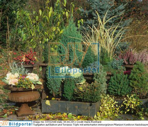winterharte bepflanzung details zu 0003162588 topfgarten auf balkon und