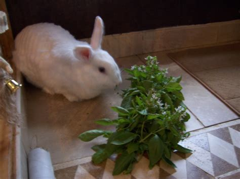 indoor garden for rabbits indoor cages rabbits indoors