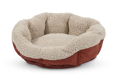 kitten beds sleeping purrty best cat beds you can buy online