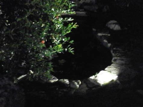 faretti da giardino a led faretti led da esterno giardini verdi