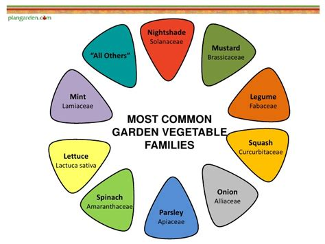 Vegetable Plant Families To Understand Companion Planting