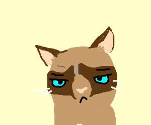 Make Your Own Grumpy Cat Meme - make your own grumpy cat meme pio