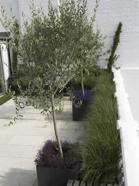 vasi per alberi il giardino in fioriera 18 alberi e arbusti in vaso