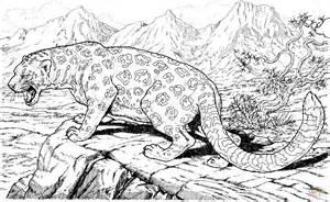 ausmalbild leopard faucht auf dem felsen ausmalbilder kostenlos zum ausdrucken