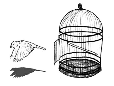 coloring pages of bird cages escaping bird cage coloring pages best place to color