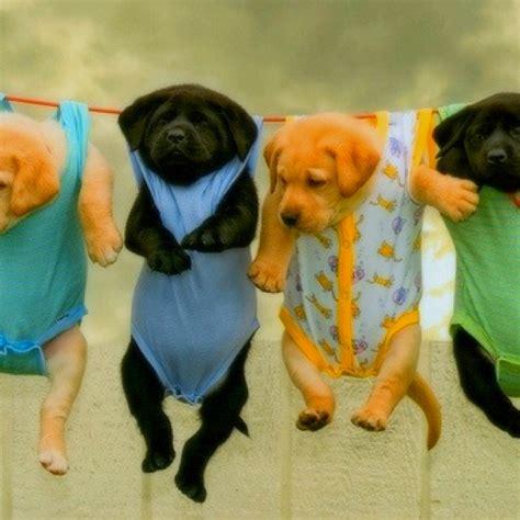 puppy in pajamas puppies in pajamas cul de sac