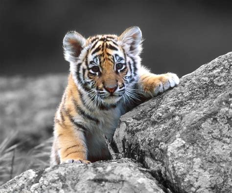 Awesome Animal amazing animal wallpapers wallpapersafari