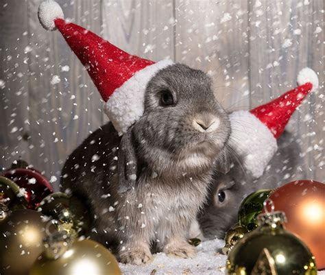 images of christmas rabbits pictures rabbits christmas winter hat balls animals holidays