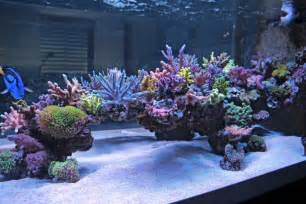 Reef Tank Aquascaping Cool Reef Tank Aquascapes Reef2reef Saltwater And Reef