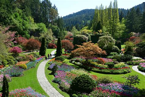 The Sunken Gardens by The Butchart Gardens The Sunken Garden May 2014