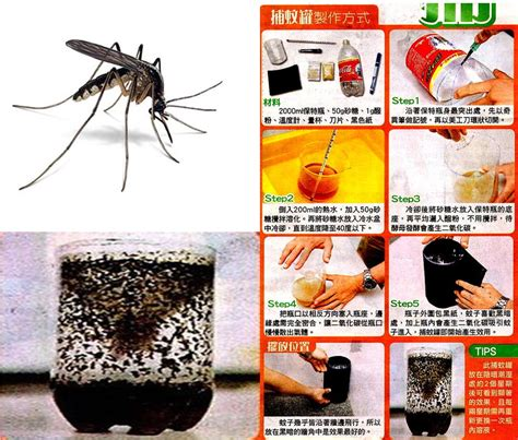 diy mosquito trap the cheapest mosquito trap the science cookie jar