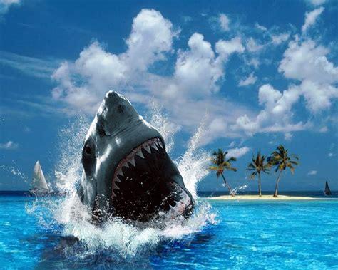 imagenes de tiburones wallpaper tibur 243 n en la playa 1280x1024 fondos de pantalla y