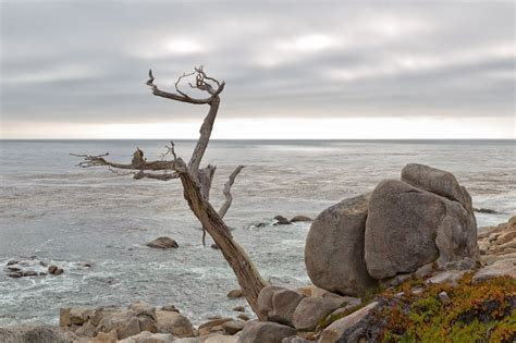new years in monterey ca pacific grove ca pictures posters news and on