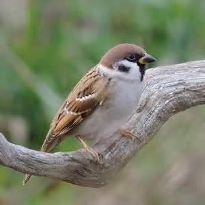 identifier les oiseaux du jardin et des parcs au printemps