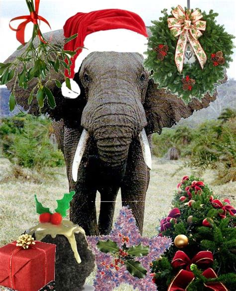 images of christmas elephants animals wearing hats december 2010