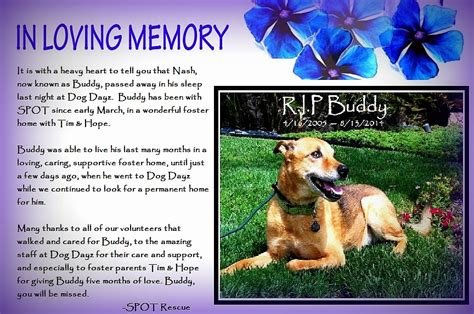 Animal Rescue Tribute by A Tribute To Buddy Saving Pets One At A Time Animal