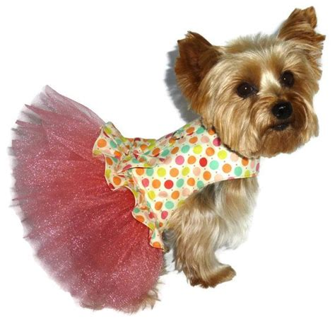 pattern for yorkie clothes 61 best tinkerbell images on pinterest little dogs cute