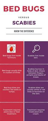 bed bugs vs scabies all bed bugs begone