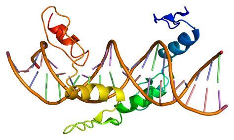 protein yy p 233 ptido yy p 233 ptido pyy
