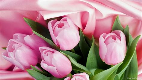 wallpaper bunga download 10 wallpaper bunga tulip pink deloiz wallpaper