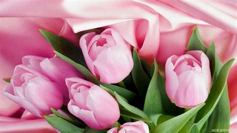 wallpaper bunga tulip pink deloiz wallpaper