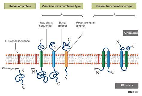 protein types different types different protein types