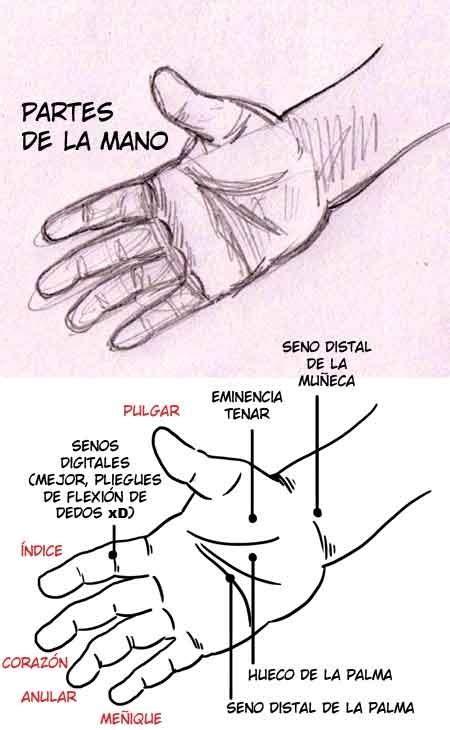 imagenes de manos haciendo ok como dibujar manos taringa