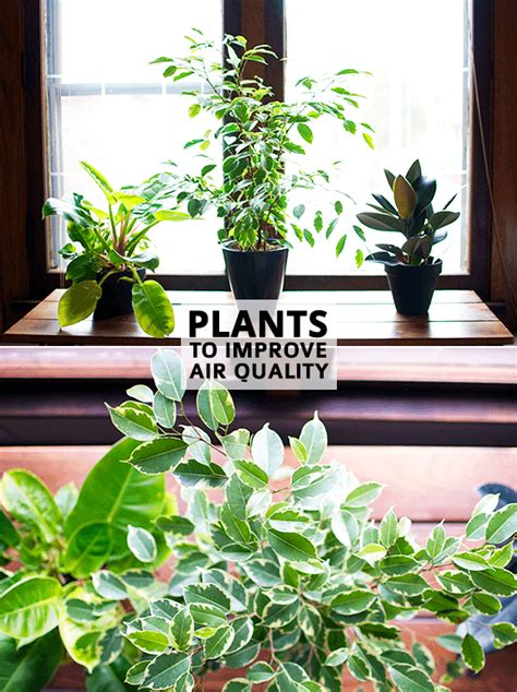 best houseplants for air quality air pollution plants images