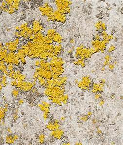 what color is mold what is yellow mold with pictures