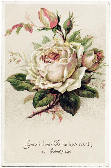 Vintage Gift Card - vintage flower white rose old postcards vintage roses vintage floral postcards