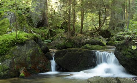 file boubinsky potok in nature reserve certova stran in