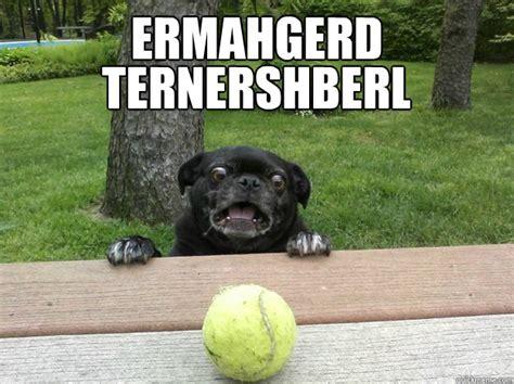 berks dogs ermahgerd ternershberl berks quickmeme