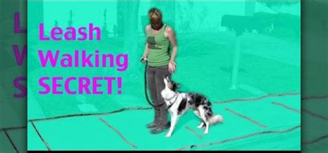 how to a to walk next to you how to teach your to walk next to you on a leash 171 dogs