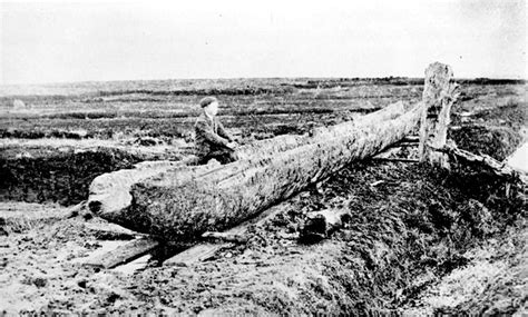canoes dublin the lurgan canoe an early bronze age boat from galway