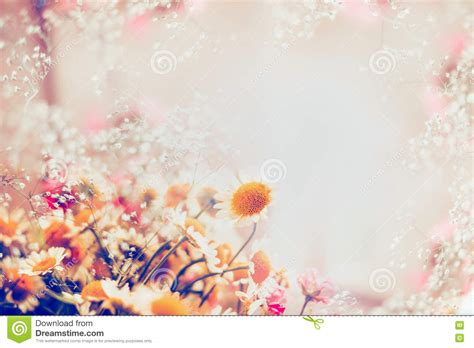 Soft Bordir Flower 2 daisies flowers on light background floral border stock photo image 74685352